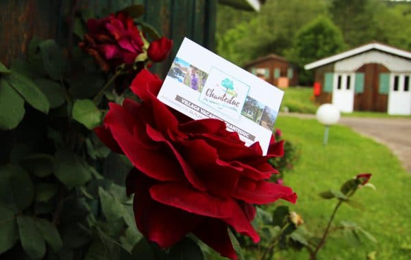 Rose accueil Chanteduc drome camping